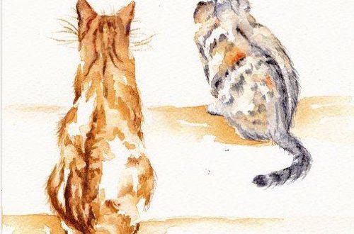 Một ngày ở nhà với mèo Adele Doan Blog