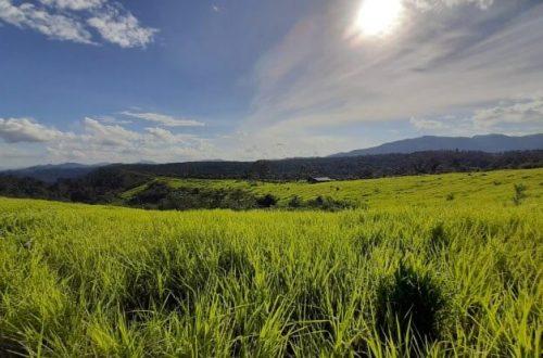Đồi cỏ Măng Đen - Review du lịch Măng Đen